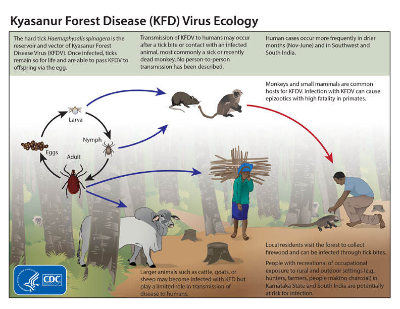 kyasanur-virus-ecology